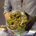 Medical Cannabis In Arizona1