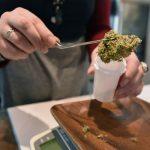 Cannabis In Massachusetts 1