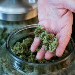 Cannabis Strains1