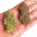 Cannabis Strains2